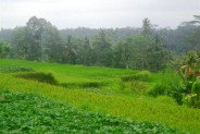Stunning view land for sale in Ubud Tegalalang – TJUB152