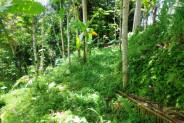 Hidden beauty Land for sale in Ubud Bali  – LUB155