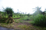magnificent view by the roadside Ubud Land for sale in Bali – LUB159