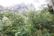 beautiful and lush Land for sale in Ubud Bali – LUB160
