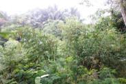 beautiful and lush Land for sale in Ubud Bali – LUB160