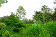 Land for sale in Ubud beautiful and lush – LUB160