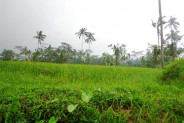 Ubud Land for sale in Bali on the green valley – LUB161