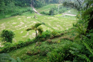 hillside and ricefields view Land for sale in Ubud Bali – LUB162