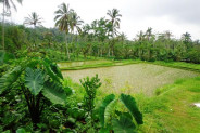 Land for sale in Ubud Bali Lush with delightful view ricefields – LUB164