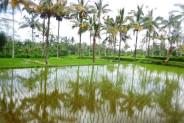 Land for sale in Ubud scenic land near Elephant Safari park – LUB165