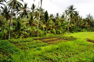Land in Ubud, 60 ares @ Rp 335 mill / are with beautiful view in Katik Lantang – TJUB064