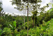 Land in Ubud, Tegalalang 42 ares with valley and river view – TJUB074