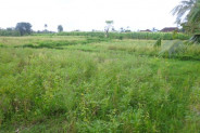 Land for sale in Ubud Bali near Monkey forest in Ubud Center – LUB174