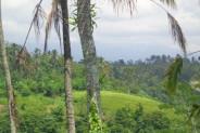 Land for sale in Ubud Bali premium location in northern of Ubud – LUB175