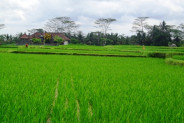 Land for sale in Ubud Bali development for big value – LUB177