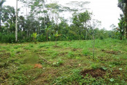 Land for sale in Ubud Bali traditional Balinese setting – LUB179