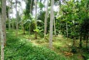 Land for sale in Ubud Bali beautiful forest so close to Ubud – LUB191