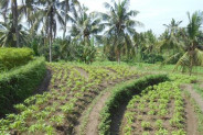 Land for sale in Ubud Bali excellent view Great Price – LUB181