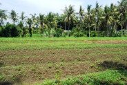 Land for sale in Ubud Bali beutiful paddy view in Tegalalang Ubud – LUB182