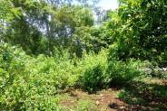 Land for sale in Jimbaran Bali 3,948 m2 in Jimbaran Ungasan