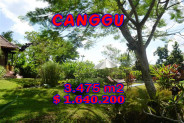 Land in Canggu for sale 34.75 Ares with Close to the beach – TJCG101