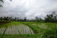 Land for sale in Ubud Bali 1,200 sqm in Ubud Tegalalang