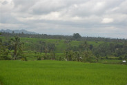 Land for sale in Tabanan Bali 4,000 m2 with montain and rice paddy view
