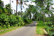 Land for sale in Ubud Bali Rice Paddy and River View in Ubud Tegalalang