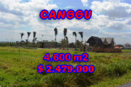 Land for sale in Canggu Bali, Attractive view in Canggu pererenan – TJCG117