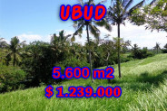 Land for sale in Bali, Beautiful view in Ubud Bali – 5,600 sqm @ $ 221