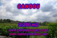 Terrific Property in Bali, Land for sale in Canggu Bali – 2.200 sqm @ $ 283