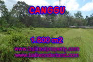 Splendid Property for sale in Bali, Canggu land for sale – 1,800 sqm @ $ 594
