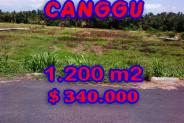 Eye-catching Property in Bali, Land sale in Canggu Bali – 1.200 m2 @ $ 283