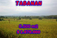 Land in Bali for sale, Stunning Property in Tabanan Bali – 5.500 m2 @ $ 39