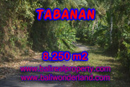 Beautiful Property for sale in Bali, land for sale in Tabanan Bali – TJTB073