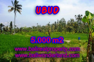 Land for sale in Bali, Fantastic view in Ubud Bali – 5.000 m2 @ $ 75