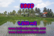 Attractive Property for sale in Bali, Ubud land for sale – 1.260 m2 @ $ 295