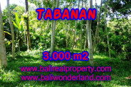 Land for sale in Bali, Outstanding property in Tabanan Bali – 3.000 m2 @ $ 22