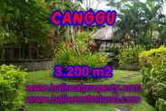 Splendid Property for sale in Bali, LAND FOR SALE IN CANGGU Bali  – 3.200 m2 @ $ 500
