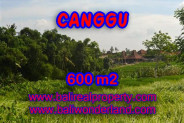 Unbelievable Property for sale in Bali, land for sale in Canggu Bali  – 600 m2 @ $ 425