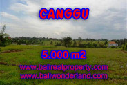 Excellent Property for sale in Bali, land for sale in Canggu Bali  – 5.000 m2 @ $ 325