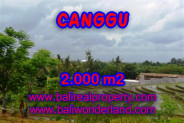 Property for sale in Canggu Bali, Superb land for sale in Canggu Babakan  – 2.000 m2 @ $ 475