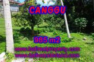 Exotic Property in Bali, Land sale in Canggu Bali – 985 m2 @ $ 545
