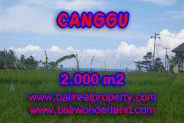 Astonishing Property in Bali, Land for sale in Canggu Bali – 2.000 m2 @ $ 600