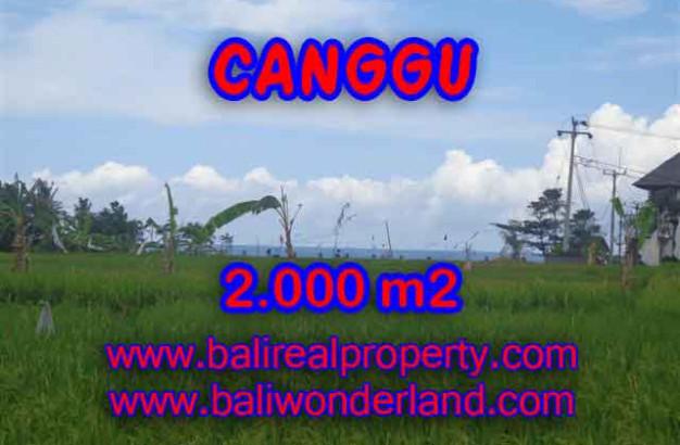 Astonishing Property in Bali, Land for sale in Canggu Bali – 2.000 m2 @ $ 600
