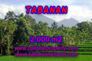 Astonishing Property in Bali, Land for sale in Tabanan Bali – 2.000 m2 @ $ 50