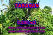 Astounding Property in Bali, Land in Tabanan Bali for sale – 2.500 m2 @ $ 75