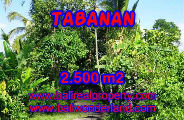 Astounding Property in Bali, Land in Tabanan Bali for sale – 2.500 m2 @ $ 75
