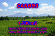 Stunning Land for sale in Bali, Rice fields and mountain view in Canggu Bali – TJCG144