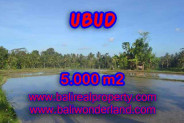 Attractive Property for sale in Bali, Ubud land for sale – 5.000 m2 @ $ 165