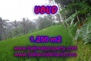 Terrific Property for sale in Bali, LAND FOR SALE IN UBUD Bali  – 1.250 m2 @ $ 135
