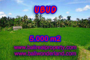 Fantastic Property in Bali, LAND FOR SALE IN UBUD Bali – 5.000 m2 @ $ 170