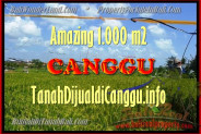 Magnificent 1.000 m2 LAND FOR SALE IN CANGGU TJCG154