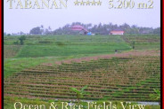 Exotic PROPERTY 5.200 m2 LAND IN TABANAN BALI FOR SALE TJTB185